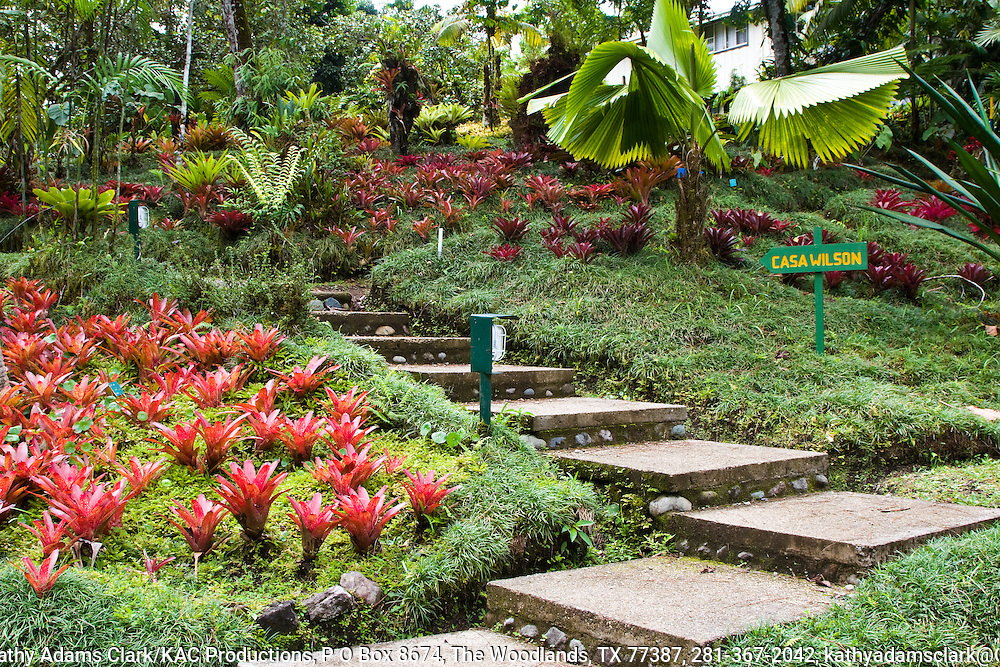 wilson Botanical Gardens, Organization for Tropical Studies property, near the Panama border, in southern Costa rica.