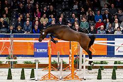 021, Gueb D'Ouilly<br /> KWPN Hengstenkeuring - 's Hertogenbosch 2019<br /> © Hippo Foto - Dirk Caremans<br /> 30/01/2019
