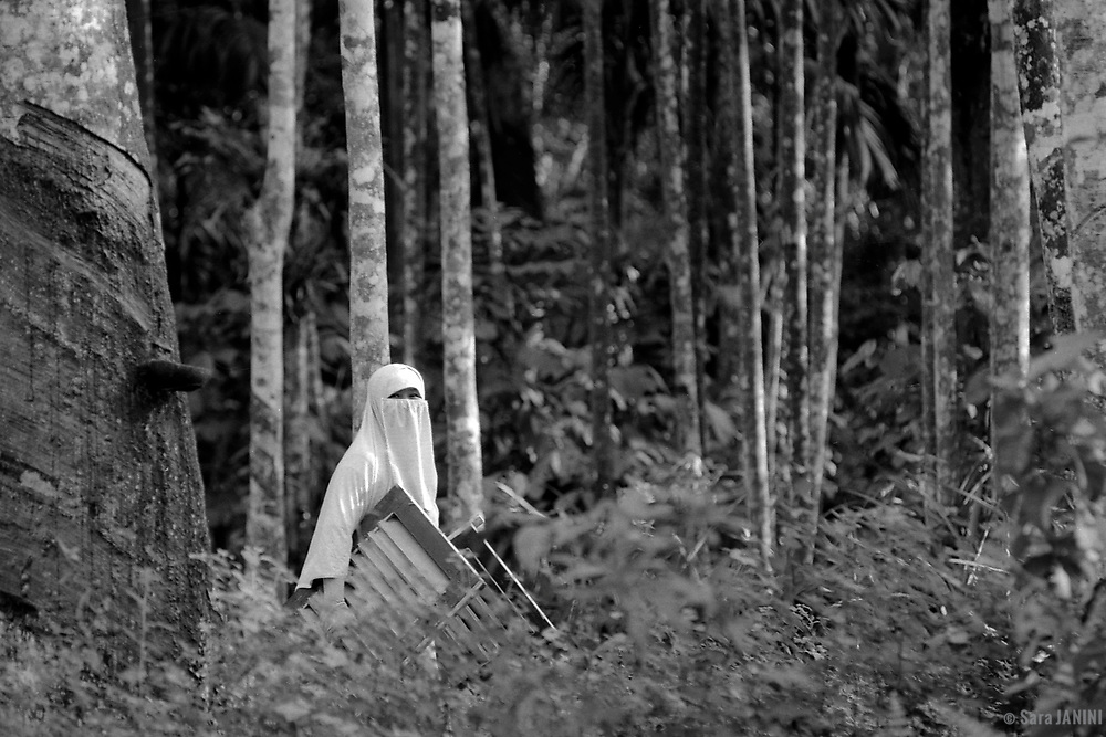 Gunnung Leuser N.P., Bukit Lawang, Sumatra, Indonesia, Asia