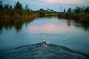 """English Setter Welpe """"Rudy"""" am 08.08. 2017 im Teich von Stara Lysa, (Tschechische Republik).  Rudy wurde Anfang Januar 2017 geboren und ist vor einiger Zeit zu seiner neuen Familie umgezogen."""