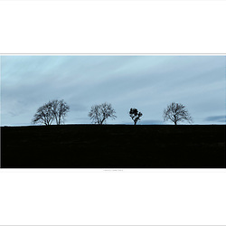 &quot;Trees / Oak Hill&quot;<br />