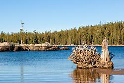 """Stump at White Rock Lake 2"" - Photograph of an old stump at White Rock Lake, California."