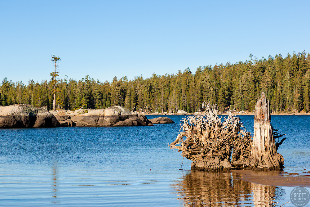 """Stump at White Rock Lake 2"" - Photograph of an old stump at White Rock Lake, California."