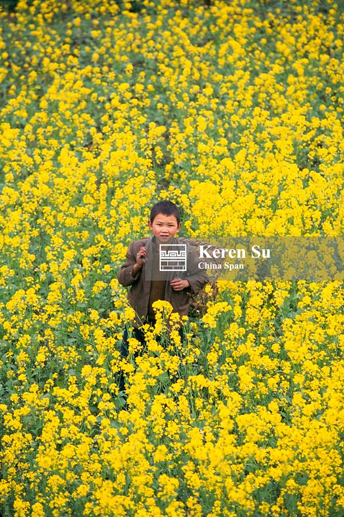 A boy carrying basket in the rape fields with golden blossoms, Guizhou Province, China