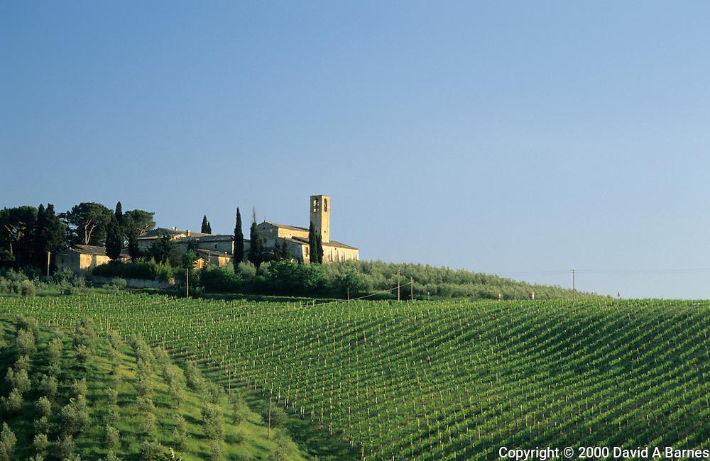 Monte Oliveto Church, olive trees, vineyard.San Gimignano, Tuscany, Italy