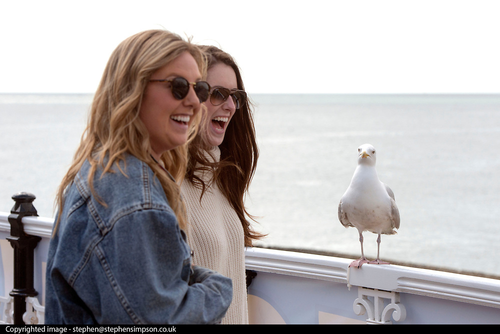 © Licensed to London News Pictures. 18/04/2014. Brighton, UK. A seagull interrupts a photo opportunity with tourists.  People enjoy the  bank holiday sunshine at Brighton today 18th April 2014. Photo credit : Stephen Simpson/LNP