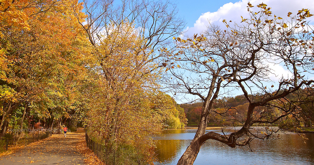 The vibrant October fall colors highlight the trees covering the lone runner as he jogs beside the lake of Van Cortlandt Park in the Bronx, New York.