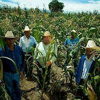 Mexico's farmers work in a corn plantation in the central Puebla state in Mexico. July 2009. Photographer: Bernardo De Niz