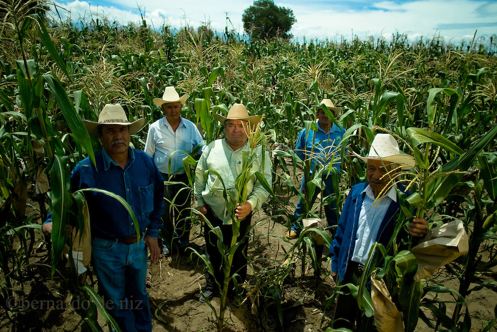 Mexico's farmers work in a corn plantation in the central Puebla state in Mexico. July 2009. Photographer: Bernardo De Niz