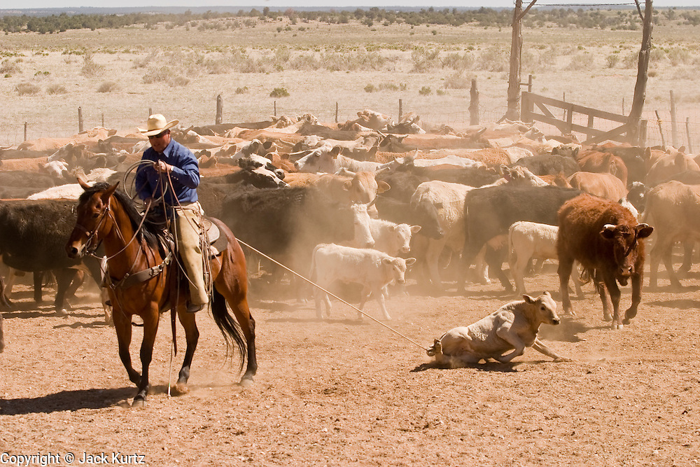 how to get started in cattle ranching