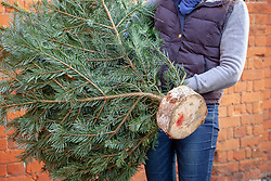 Holding a Christmas tree with log stand