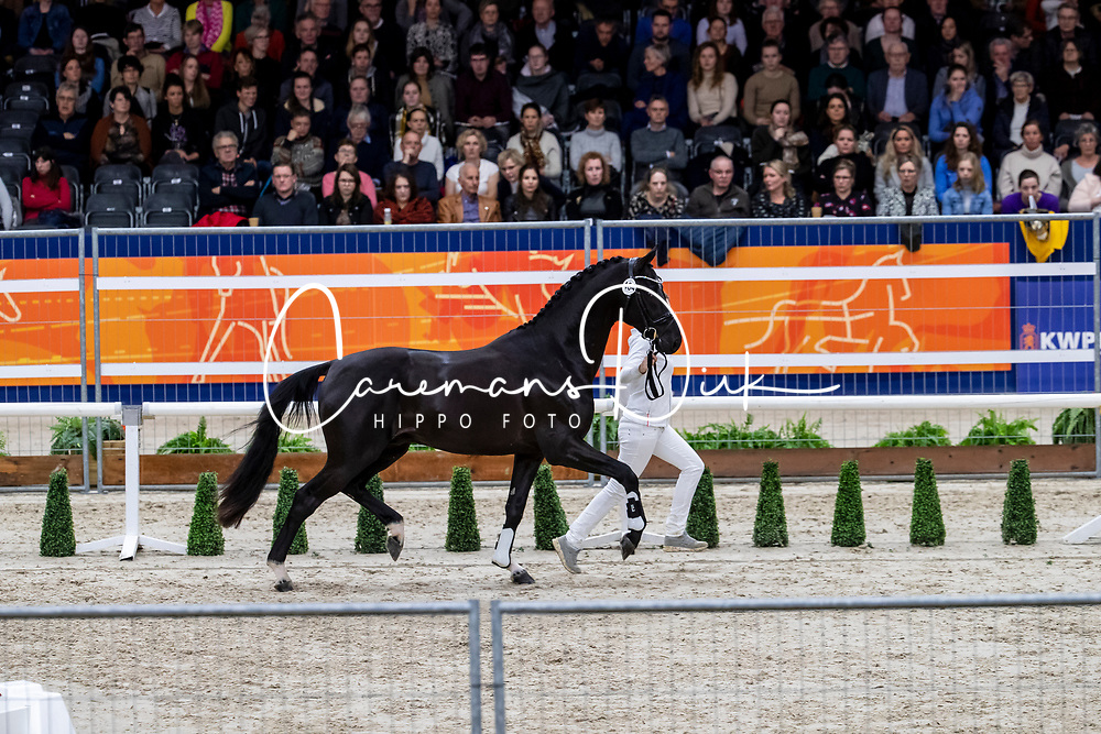 464, Majestic Taonga<br /> KWPN hengstenkeuring - 's Hertogenbosch 2020<br /> © Hippo Foto - Dirk Caremans<br /> 01/02/2020