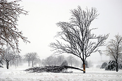 01 December 2006:  Some trees just bent, but this one broke under the weight of the ice and the force of the wind from a sharp winter storm that swept into Central Illinois and the Bloomington-Normal area causing power outages, road closures, white out conditions, tree damage, and virtually every large business and schools to close.<br />