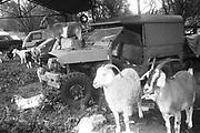 Posing Goats, Exodus Free Festival, 1997.