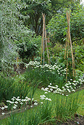 Beds in autumn lined with alliums