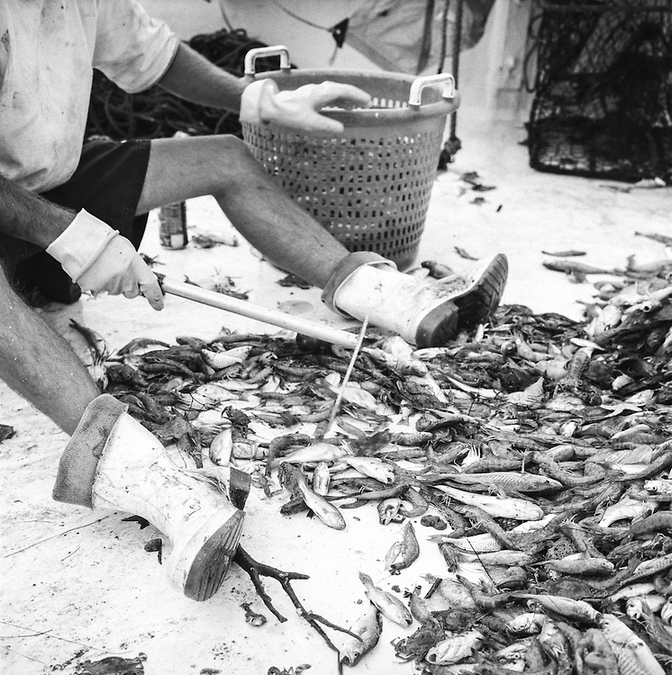 Sorting the Shrimp | July 2003