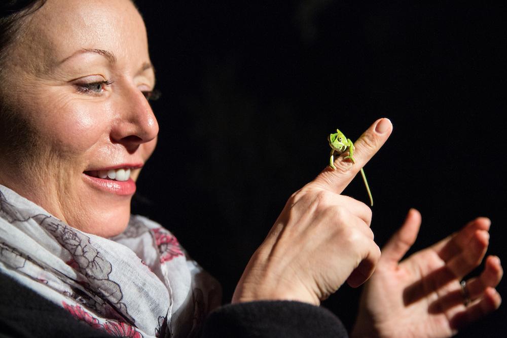 South Africa, Mpumalanga Province, Sabi Sands Reserve, (MR) Woman holds small chameleon during safari night drive at Sabi Sabi Lodge