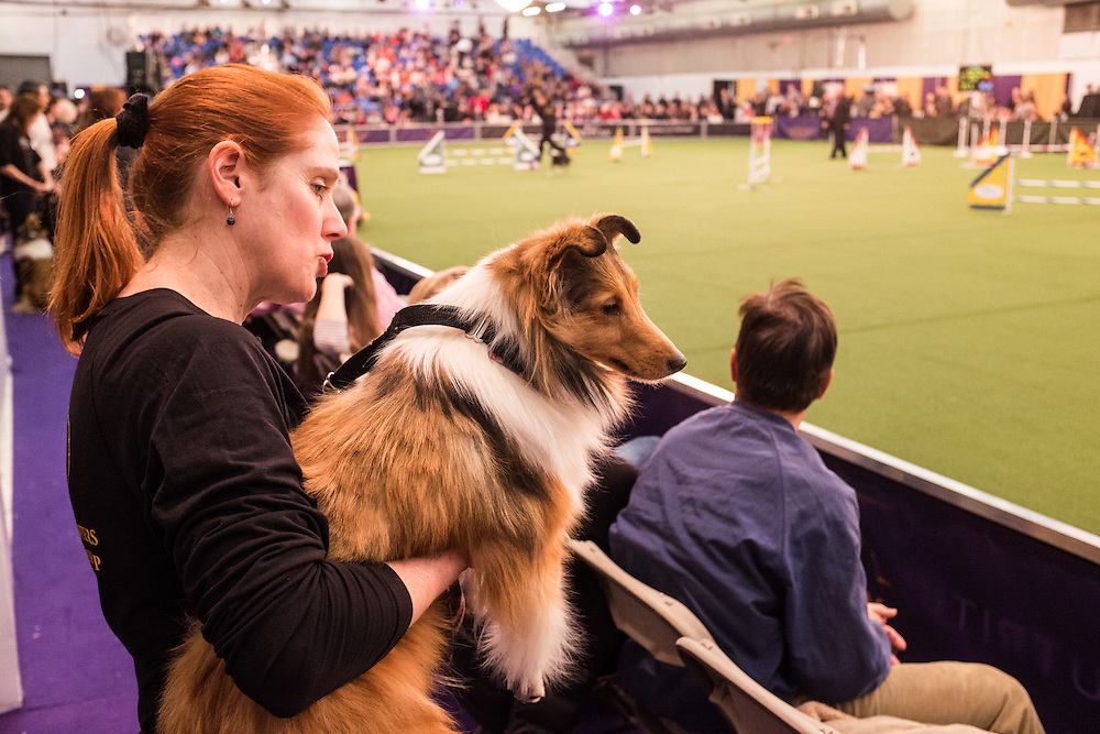 New York, NY - 8 February 2014. A handler with her dog watching the agility trials at the Westminster Kennel Club dog show.