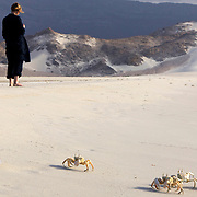 Ghost crabs, Ditwah lagoon near Qalansiyah, Socotra island, listed as World Heritage by UNESCO, Yemen, Arabia, West Asia