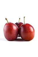 Plums o white background - studio shot