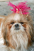 Dressed up pet with pink ribbon