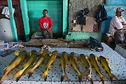 Catfish for sale<br /> Georgetown<br /> GUYANA<br /> South America