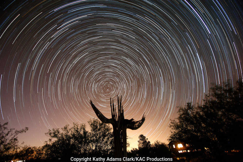 Star trail, or light left behind by the stars as the earth rotates at night, in southern Arizona with a saguaro cactus skelton.