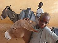 lifestock in darfur, sudan