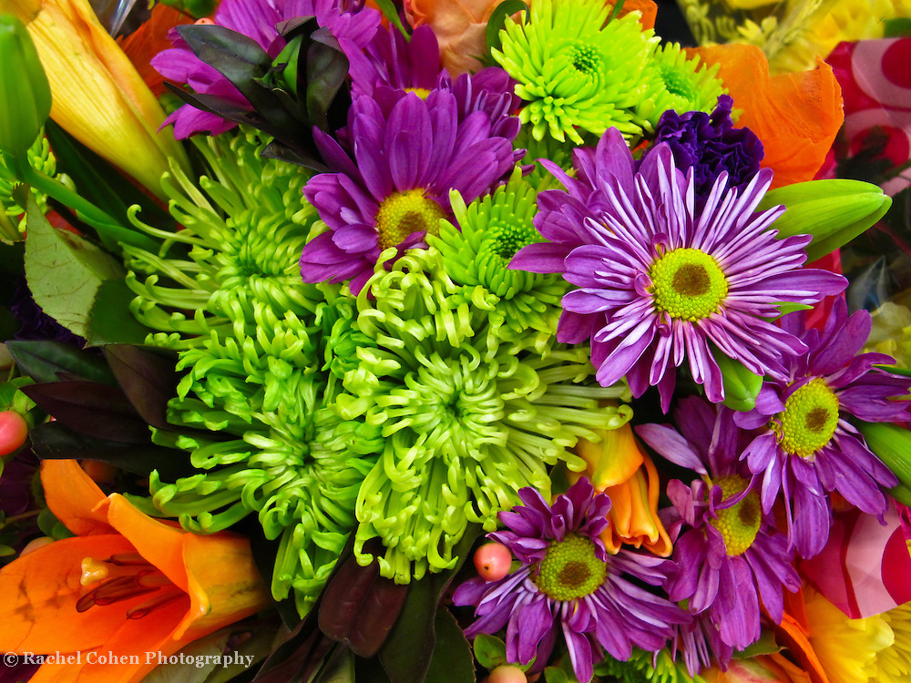 &quot;Spring Blast&quot;<br />