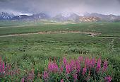 Alaska: Denali, Wildflowers