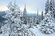 Sunrise in the Buckhorn Roadless Area looking towards the Northwest Peak Scenic Area after a snowstorm in fall. Kootenai National Forest in the Purcell Mountains, northwest Montana.