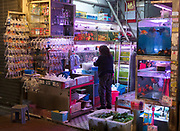 Aquarium shop at Goldfish Market, Tung Choi Street, Hong Kong, China.