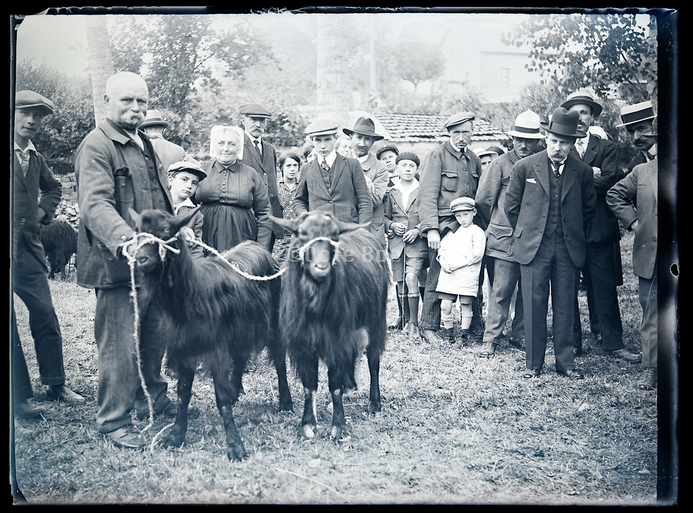 farmer showing proudly his beautiful goats to the  public France circa 1930s