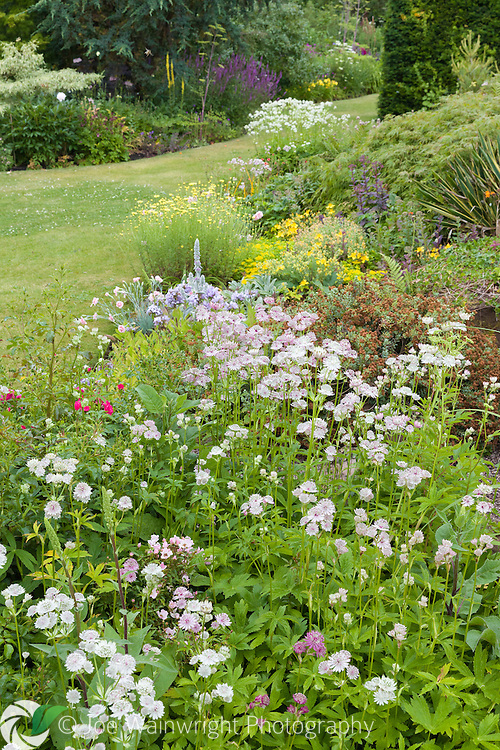 Astrantia flowers in a colourful herbaceous border at Bluebell Cottage Gardens, Cheshire