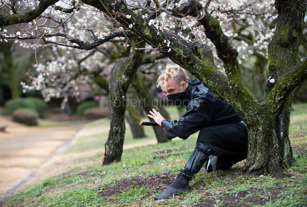 """Ninja Chris  """"Sora"""" O'Neil hides among the ume trees in the grounds of Nagoya Castle, Aichi Prefecture Japan on Feb. 23, 2017. O'Neil is one of the eight ninja corps who roam the avenues of the castle and Nagoya Airport, jumping from behind trees and bushes to surprise visitors. ROB GILHOOLY PHOTO"""