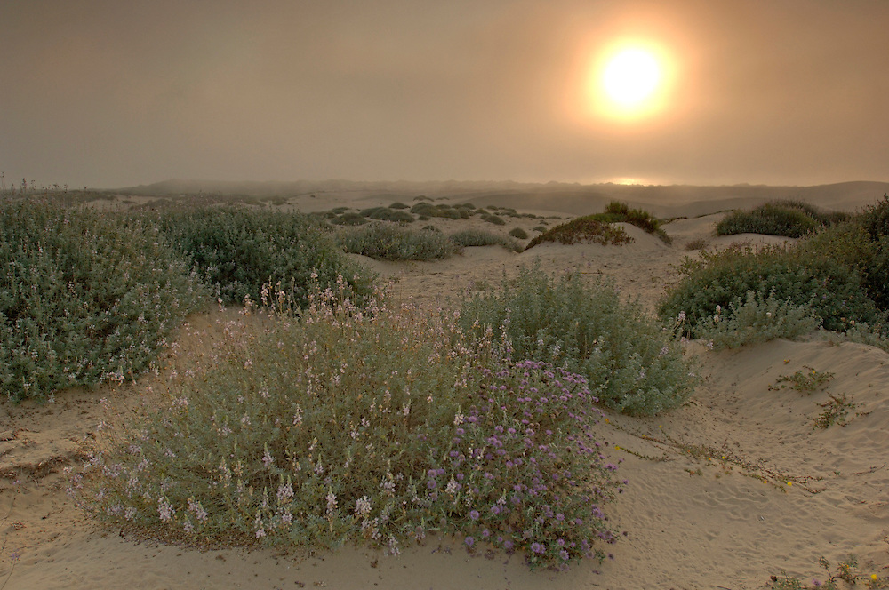 Sunset at Oceano Dunes S.V.R.A., Oceano, California, United States of America