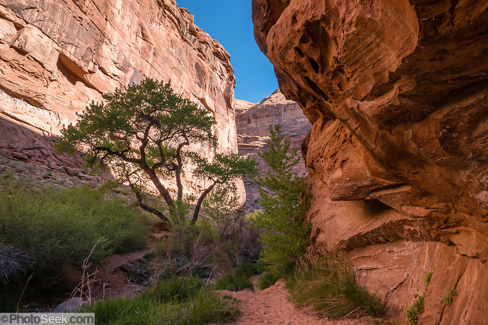 Hunter Canyon hiking trail, on BLM land, Moab Kane Creek Blvd, Moab, Utah, USA. The BLM (Bureau of Land Management) is part of the United States Department of the Interior.