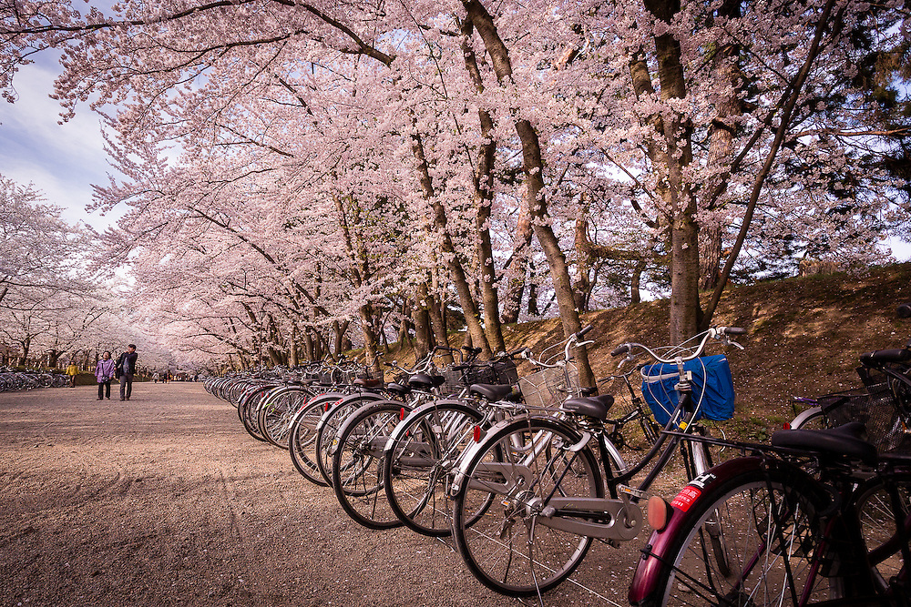 A row of bycicles in one of the many paths in Hirosaki Park