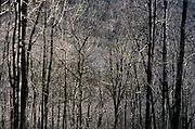 Desolate barren trees