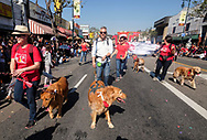 Parade participants walk their dogs during the 119th annual Chinese New Year &quot;Golden Dragon Parade&quot; in the streets of Chinatown in Los Angeles, the United States, Saturday Feburary 17, 2018. (Xinhua/Zhao Hanrong)<br /> 2月17日,在美国洛杉矶,狗和牠们的主人参加游行。当日,第119届金龙大游行在洛杉矶举行,庆祝中国农历新年。 (Photo by Ringo Chiu)<br /> <br /> Usage Notes: This content is intended for editorial use only. For other uses, additional clearances may be required.