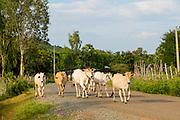 Kamphong Chhnang, Tonle Sap River,  Cambodia