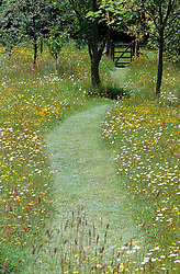 Mown path through the wildflower meadow at Great Dixter leading to a gate. Buttercups and Ox eye daisies, Leucanthemum vulgare