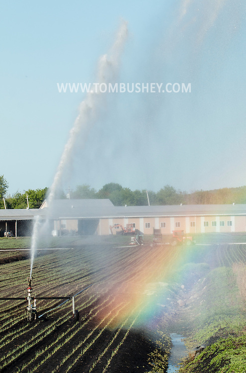 A rainbow forms from irrigation water spraying over a Black Dirt  fieldin Chester, New York. The spring has been very dry so far in Orange County.