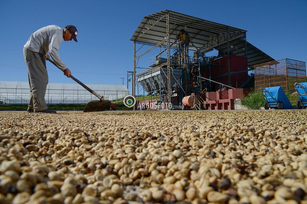 Secagem dos graos de cafe, fazenda Boa Esperanca em Braganca Paulista. // Drying of coffee beans, farm Boa Esperanca in Braganca Paulista. Foto: Paulo Fridman/Argosfoto. Braganca Paulista, SP - Brazil - 2013