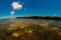Kayakers, Big Pine Kayak Adventures with mangroves in backgroves, Big Pine Key, Florida Keys, Florida USA