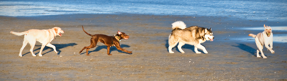 Four dogs at the beach.