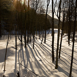 Trees and shadows on snow next to the West River in Jamaica State Park in Jamaica, Vermont.