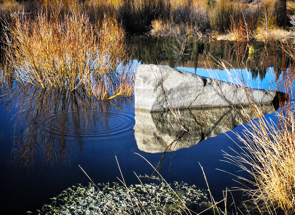 Ripples in a beaver pond.