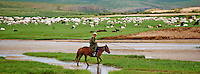 Mongolie, province de Tov, campement nomade, rassemblement des moutons // Mongolia, Tov province, Nomad camp, Rallying of horses drove
