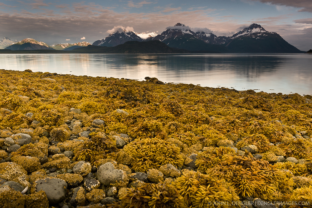 Low tide exposes rockweed at Hunter Cove at sunset on Muir Inlet in Glacier Bay National Park and Preserve in southeast Alaska. Pictured in the near background are the Klotz Hills. Behind the Klotz Hills are mountain peaks of Adams Inlet. Peaks with names are Mount Wright (far right), Mount Case (second from right), and Tree Mountain (far left).